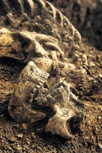 Dane Skull